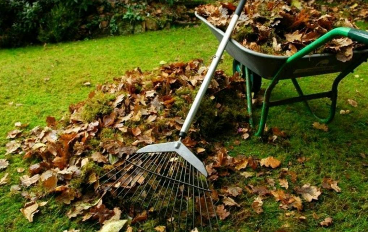 winter garden tidy up - James Kristian
